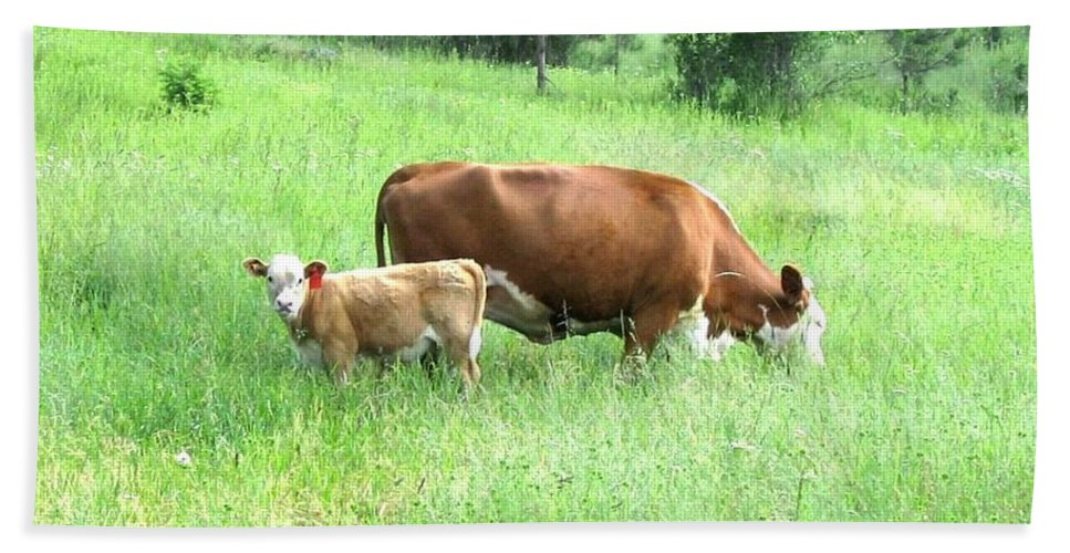 Cow Bath Sheet featuring the photograph Grazing Cow And Calf by Will Borden