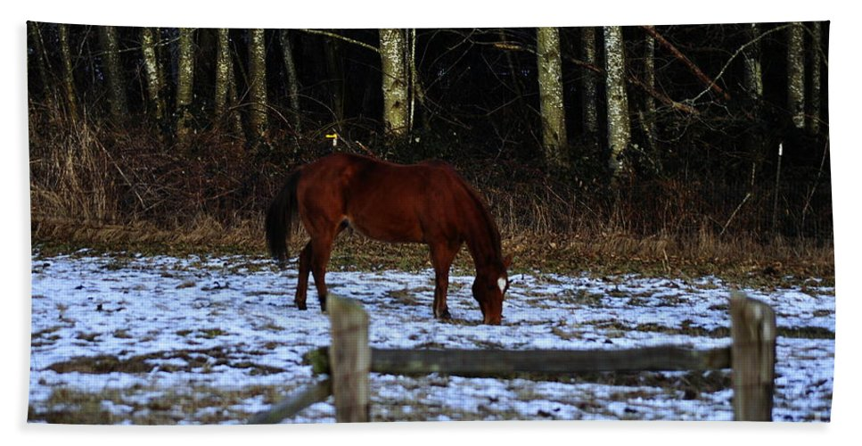 Clay Hand Towel featuring the photograph Grazing In A Washington Winter by Clayton Bruster