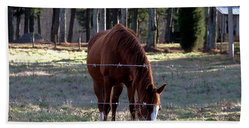 Horse Hand Towel featuring the photograph Grazing by Robert Meanor