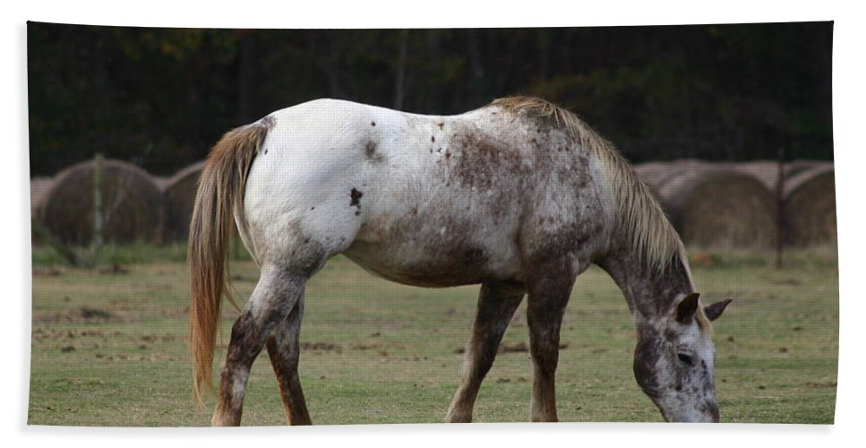 Horse Hand Towel featuring the photograph Grazing Time by Kim Henderson