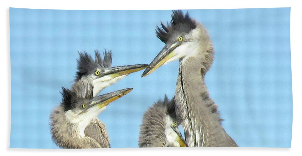 Great Blue Heron Bath Sheet featuring the photograph Great Blue Heron Discussion by Pat Miller