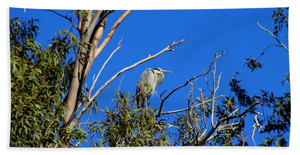 Great Blue Hand Towel featuring the photograph Great Blue Heron In Eucalyptus Tree by Teresa Stallings