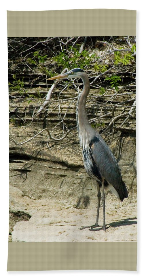 Great Blue Heron Hand Towel featuring the photograph Great Blue Heron In Ozarks by Michael Barry