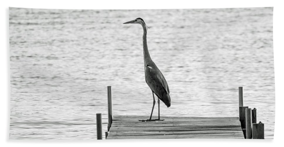 Great Blue Heron Bath Sheet featuring the photograph Great Blue Heron On Dock - Keuka Lake - Bw by Photographic Arts And Design Studio