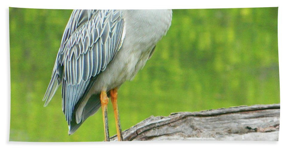 Great Blue Heron On Little Sarasota Bay Bath Sheet featuring the photograph Great Blue Heron On Little Sarasota Bay by Emmy Vickers