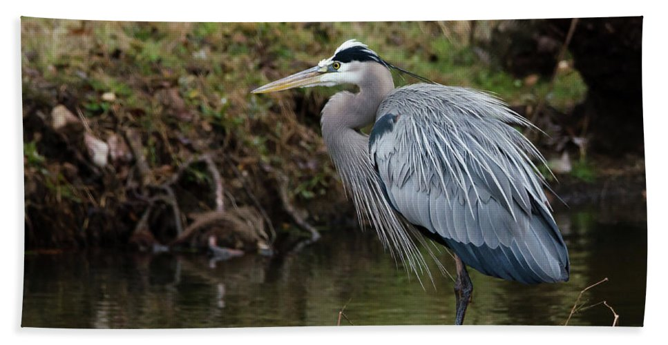 Hero Bath Sheet featuring the photograph Great Blue Heron On The Watch by George Randy Bass