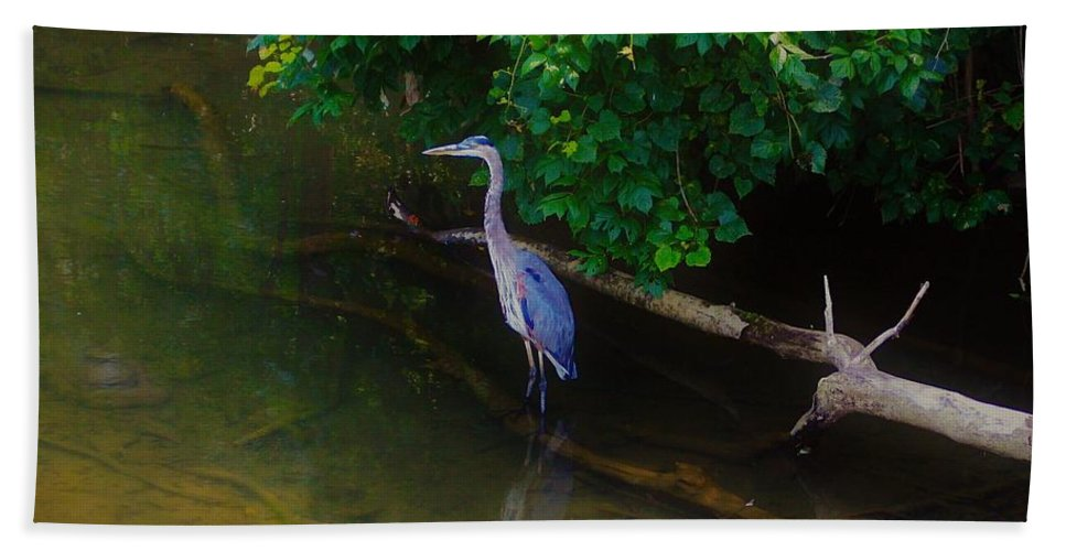 Great Blue Heron Bath Sheet featuring the photograph Great Blue Heron by Patti Whitten