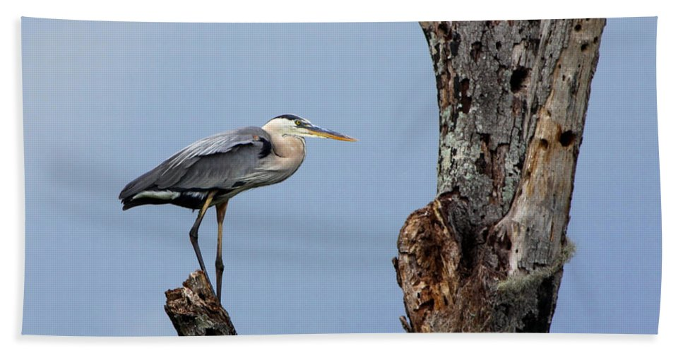 Great Blue Heron Bath Sheet featuring the photograph Great Blue Heron Perched by Barbara Bowen