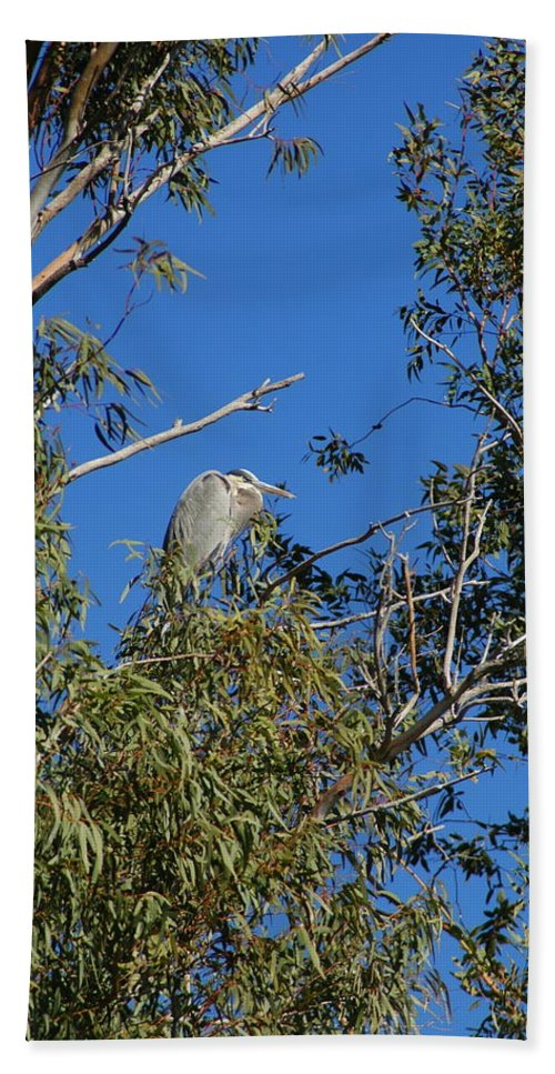 Heron Hand Towel featuring the photograph Great Blue Heron by Teresa Stallings