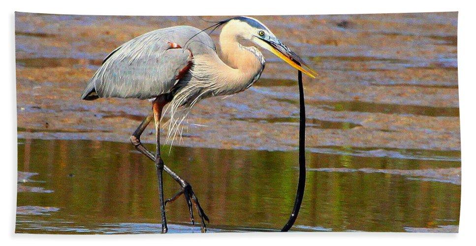 Great Blue Heron Bath Sheet featuring the photograph Great Blue Heron Wrestles A Snake by Barbara Bowen