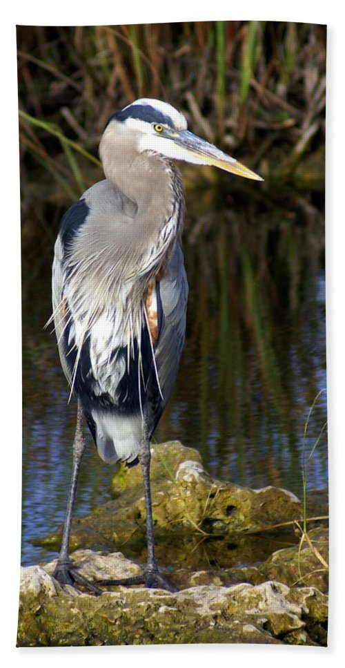 Great Blue Heron Bath Sheet featuring the photograph Great Blue by Marty Koch
