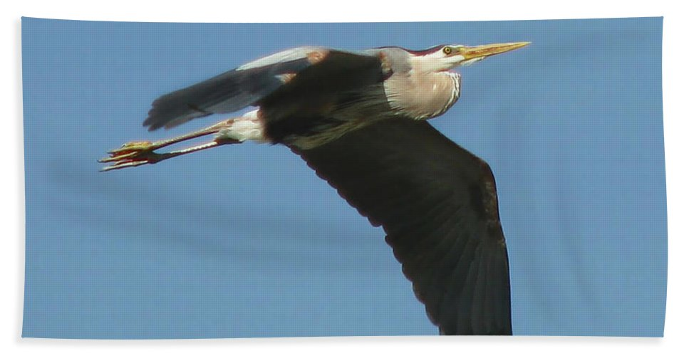 Nature Bath Sheet featuring the photograph Great Blue by Peggy Urban