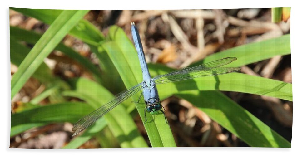 Plant Hand Towel featuring the photograph Great Blue Skimmer by Karen Silvestri