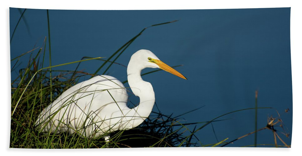 Bird Bath Sheet featuring the photograph Great Egret by JS Photography