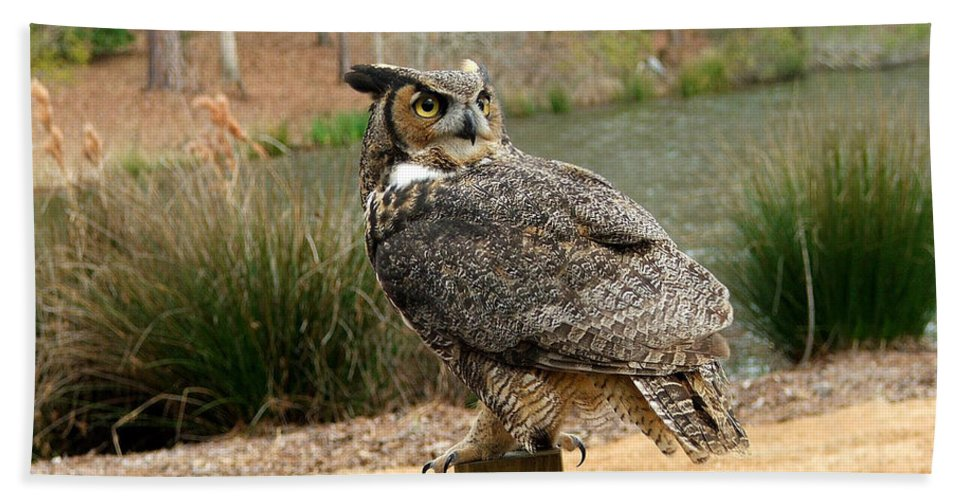 Wildlife Hand Towel featuring the photograph Great Horned Owl 1 by Robert Meanor
