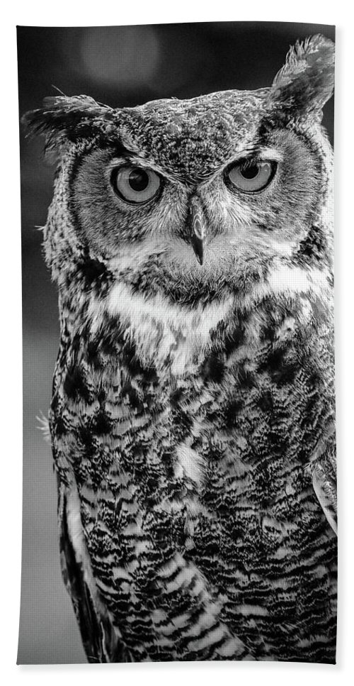 Great Horned Owl Bath Sheet featuring the photograph Great Horned Owl Bw IIi by Athena Mckinzie