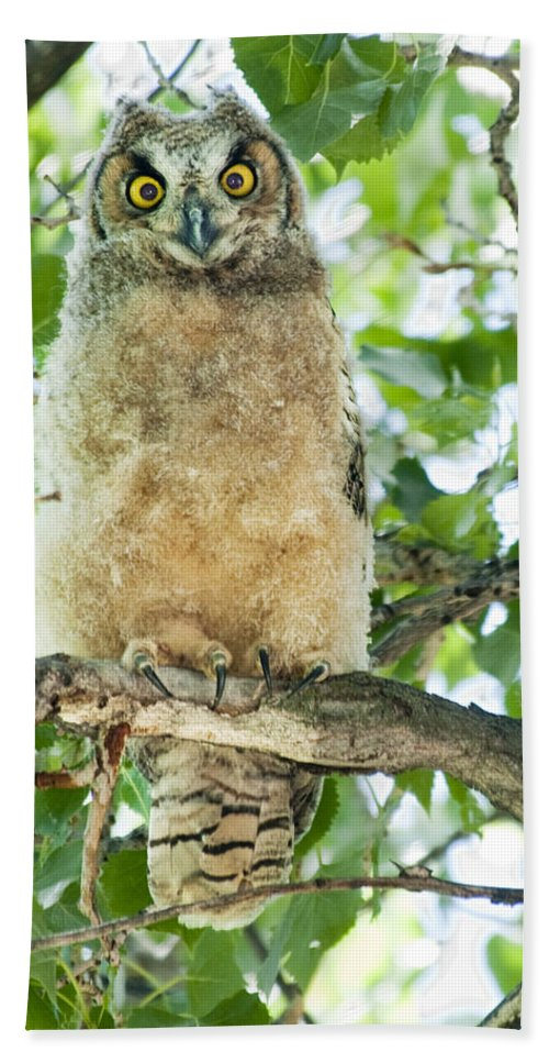 Owl Hand Towel featuring the photograph Great Horned Owl by Gary Beeler