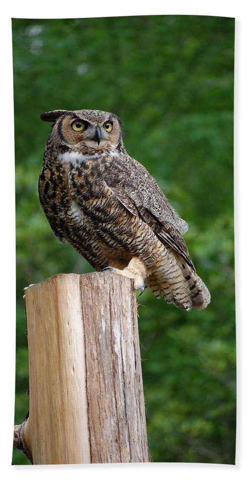 Raptor Hand Towel featuring the photograph Great Horned Owl by Robert Meanor