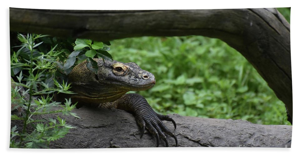 Komodo-dragon Bath Sheet featuring the photograph Great Look At A Komodo Monitor Lizard With Long Claws by DejaVu Designs