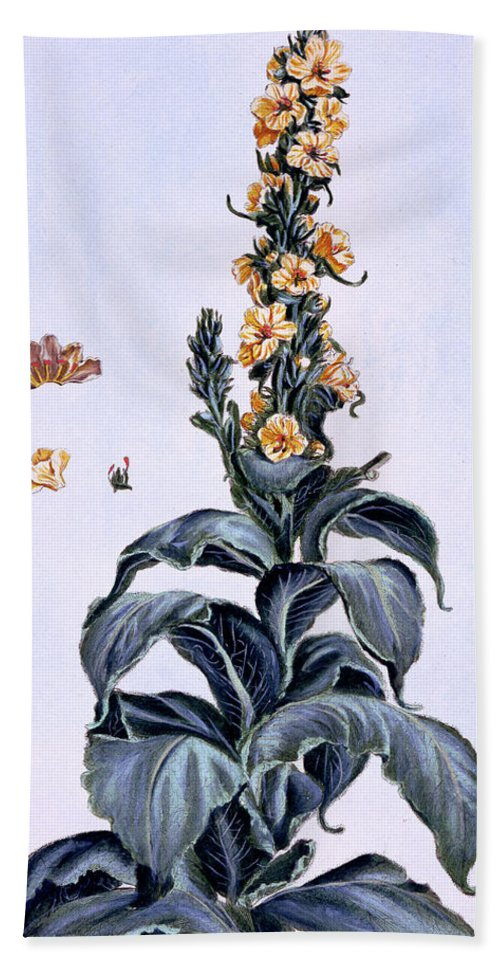 Green Hand Towel featuring the painting Great Mullein by Pierre-Joseph Buchoz