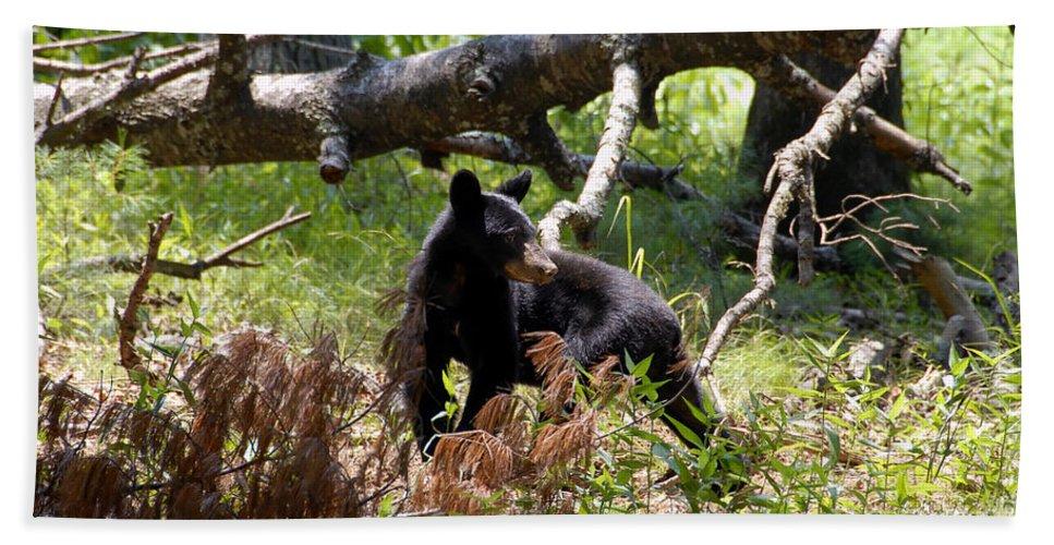 Bear Bath Sheet featuring the photograph Great Smoky Mountain Bear by David Lee Thompson