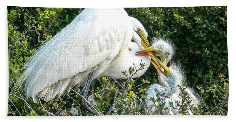 Great Egrets Hand Towel featuring the photograph Great White Egret Family by Judi Dressler