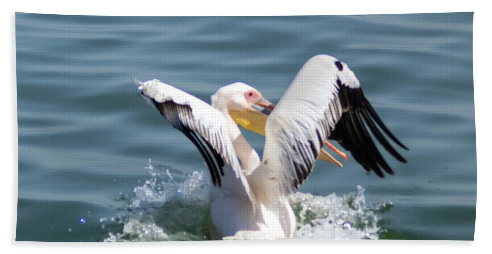 Pelican Bath Sheet featuring the photograph Great White Pelican In Flight by Hazel Wright