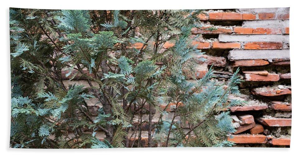 Georgia Mizuleva Hand Towel featuring the photograph Green And Red - Cypress Branches Over Antique Roman Brick Wall by Georgia Mizuleva