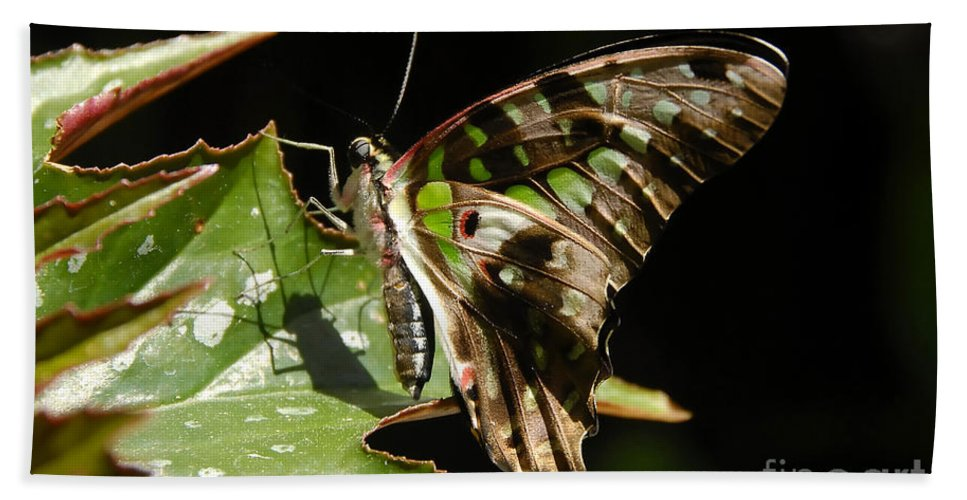 Butterfly Hand Towel featuring the photograph Green Checkered Skipper by David Lee Thompson