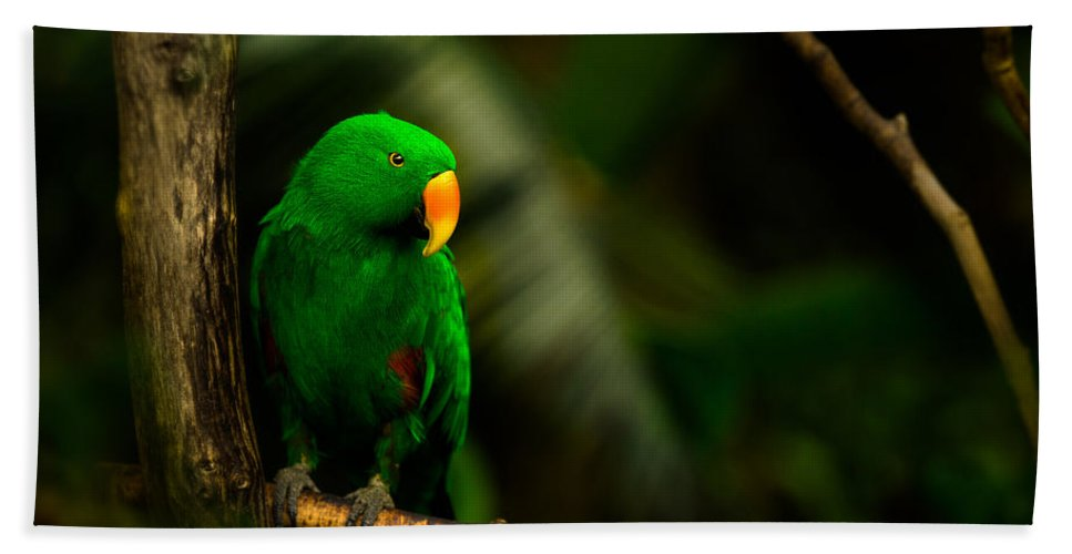 Bloedel Flora Bird Conservatory Bath Towel featuring the photograph Green Eclectus Parrot Male by Peter v Quenter