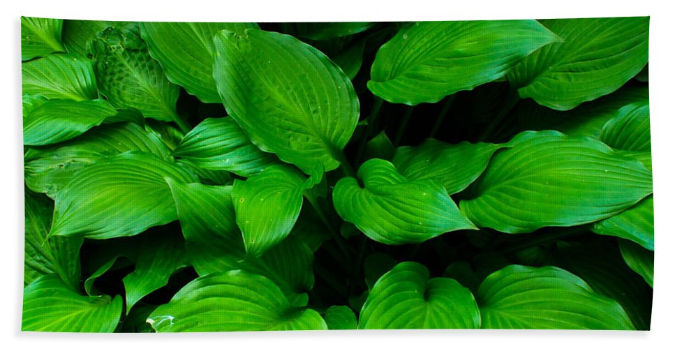 Foliage Bath Sheet featuring the photograph Green Foliage by Andrea Anderegg