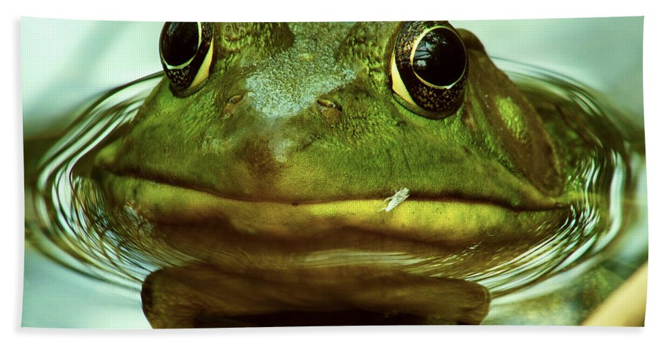 Frog Hand Towel featuring the photograph Green Frog by Michael Peychich