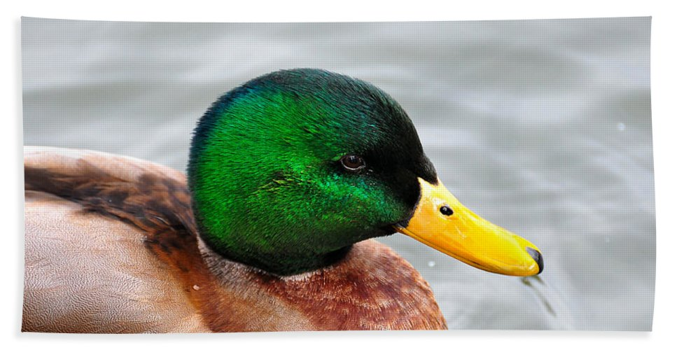 Hand Towel featuring the photograph Green Head by Todd Hostetter