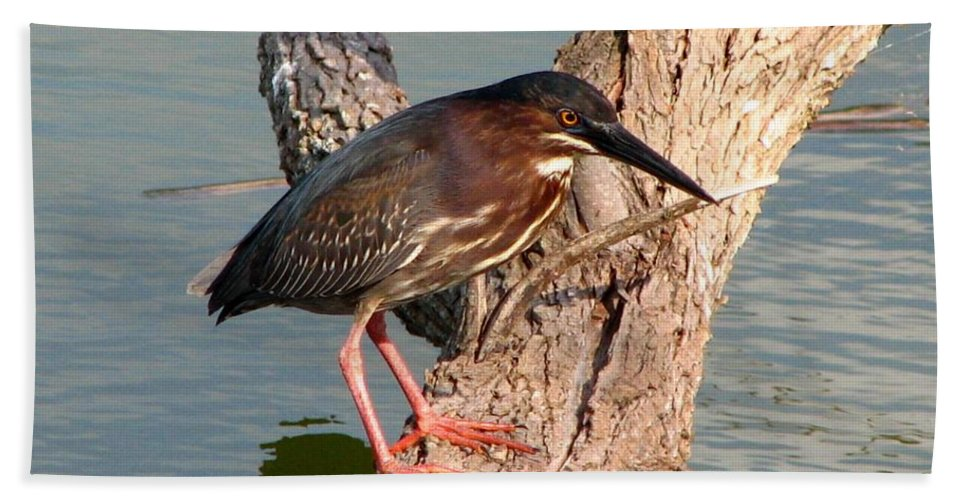 Green Heron Hand Towel featuring the photograph Green Heron 1 by J M Farris Photography
