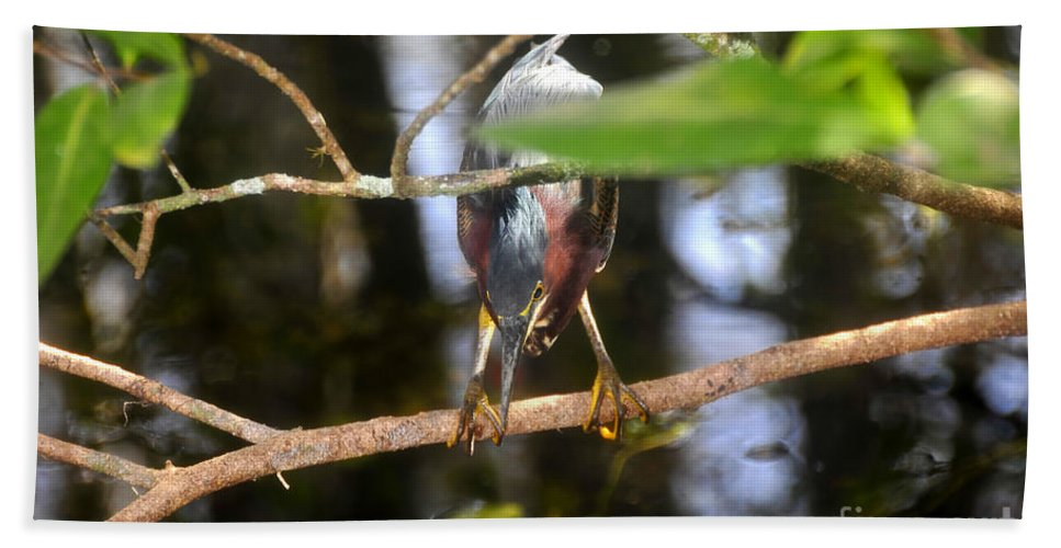 Green Heron Hand Towel featuring the photograph Green Heron Hunting by David Lee Thompson