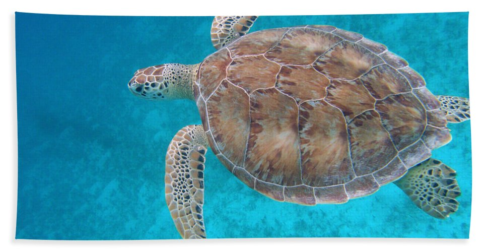 Green Sea Turtle Hand Towel featuring the photograph Green In Blue by Kimberly Mohlenhoff