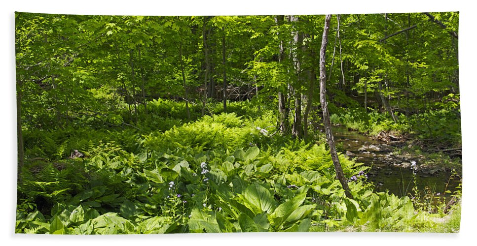 Creek Hand Towel featuring the photograph Green Landscape Of Summer Foliage by Mother Nature