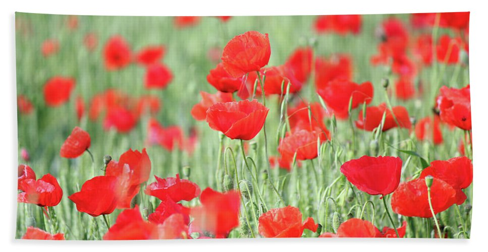 Wheat Hand Towel featuring the photograph Green Wheat And Red Poppy Flowers by Goce Risteski