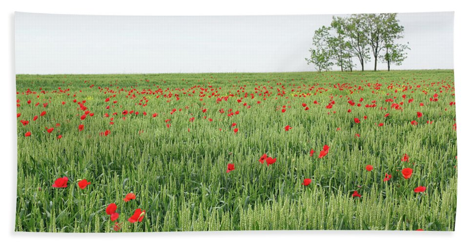 Wheat Hand Towel featuring the photograph Green Wheat Field Spring Scene by Goce Risteski