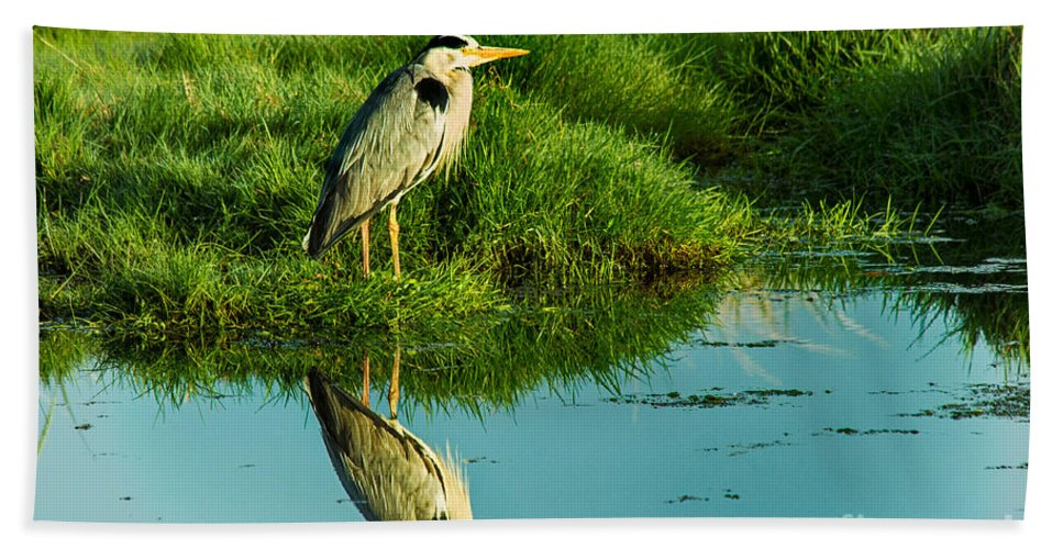 Heron Bath Sheet featuring the photograph Grey Heron by Nick Eagles