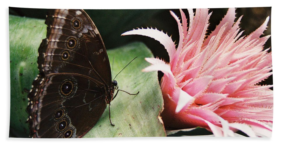 Butterfly Hand Towel featuring the photograph Grey Pansy Pink Bromeliad by Ric Bascobert