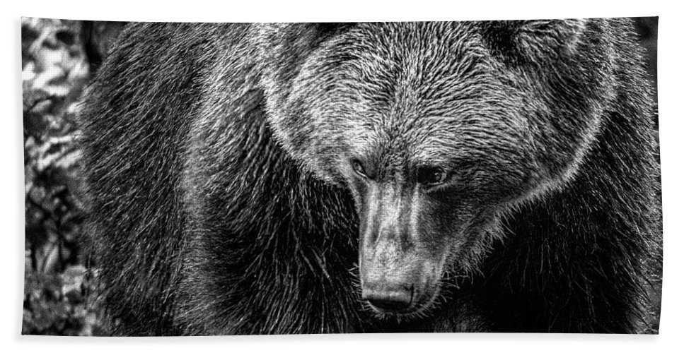 Animal Hand Towel featuring the photograph Grizzly Bear In Black And White by Ineke Mighorst