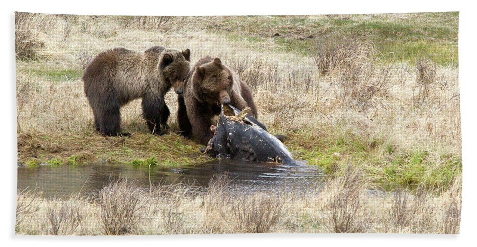 Yellowstone Hand Towel featuring the photograph Grizzly Dinner by Steve Stuller