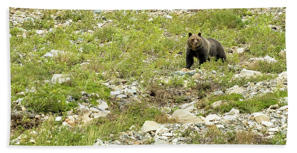 Grizzly Bear Bath Sheet featuring the photograph Grizzly Watching People Watching Grizzly No. 2 by Belinda Greb