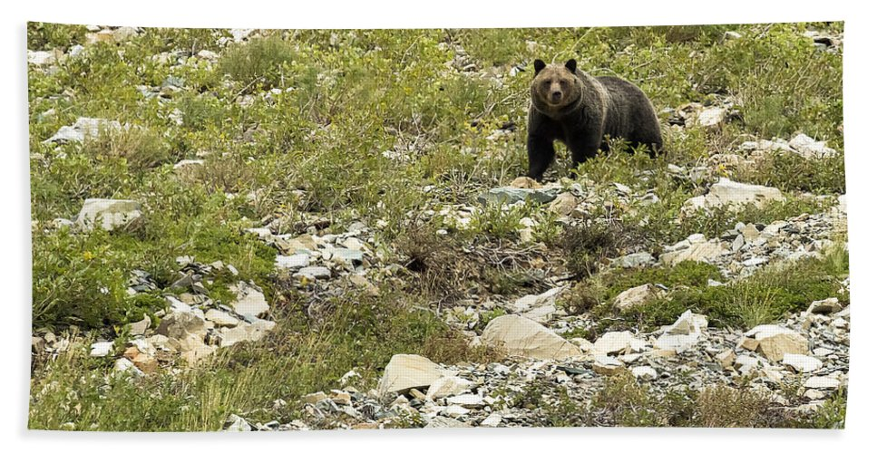 Grizzly Bear Bath Sheet featuring the photograph Grizzly Watching People Watching Grizzly No. 3 by Belinda Greb