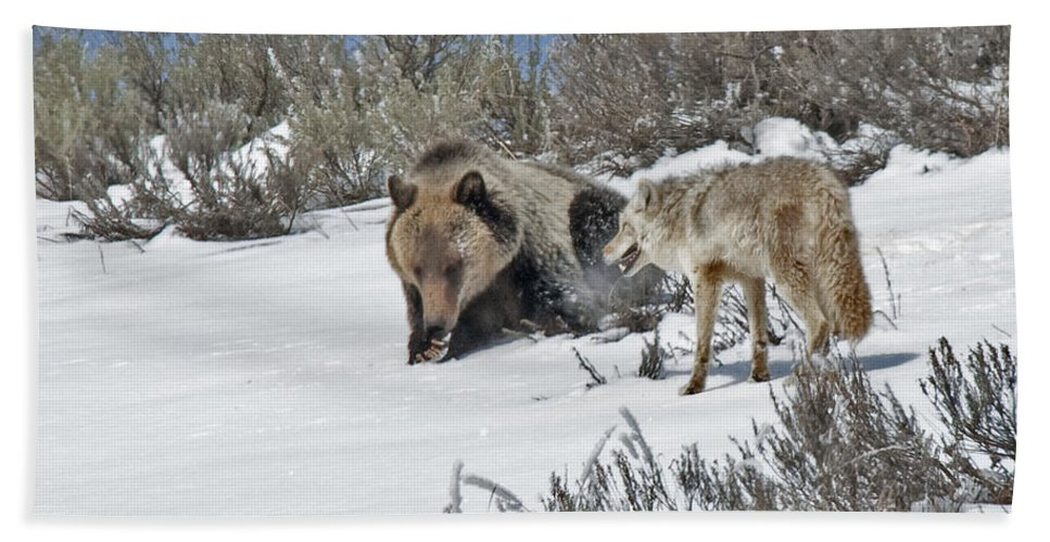 Grizzly Hand Towel featuring the photograph Grizzly With Coyote by Gary Beeler