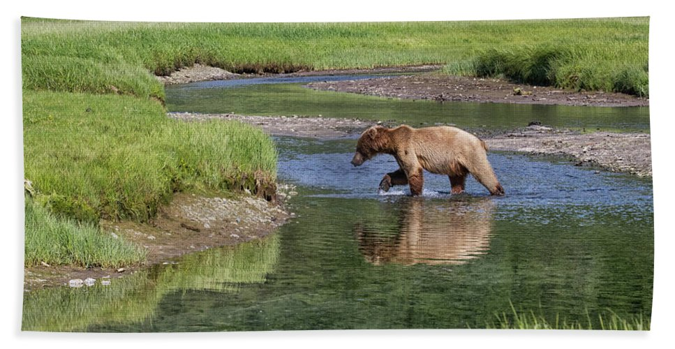 Alaska Adventure Bath Sheet featuring the photograph Grizzy Bear Crossing The River by Rob Daugherty