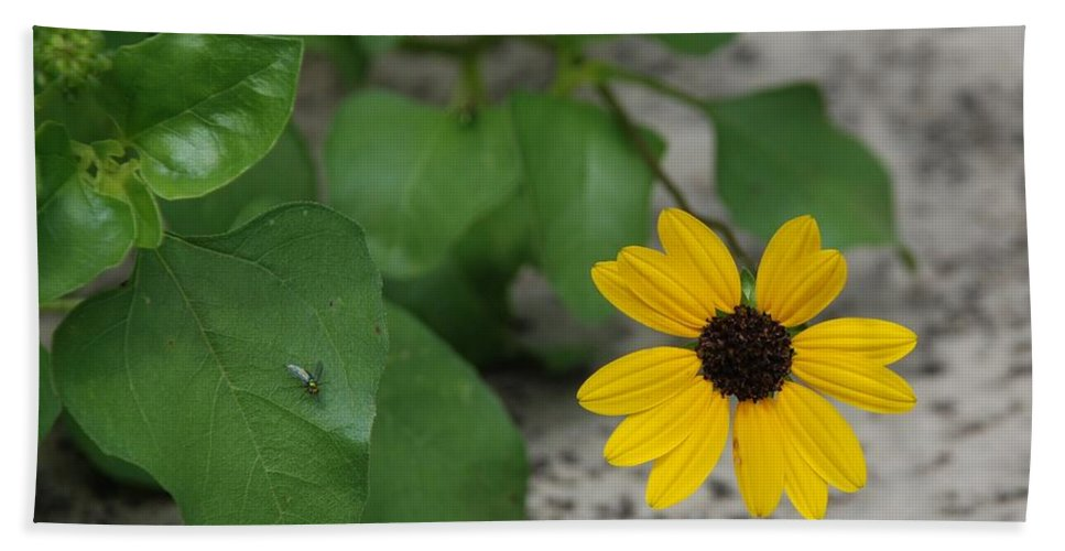 Macro Hand Towel featuring the photograph Grounded Sunflower by Rob Hans