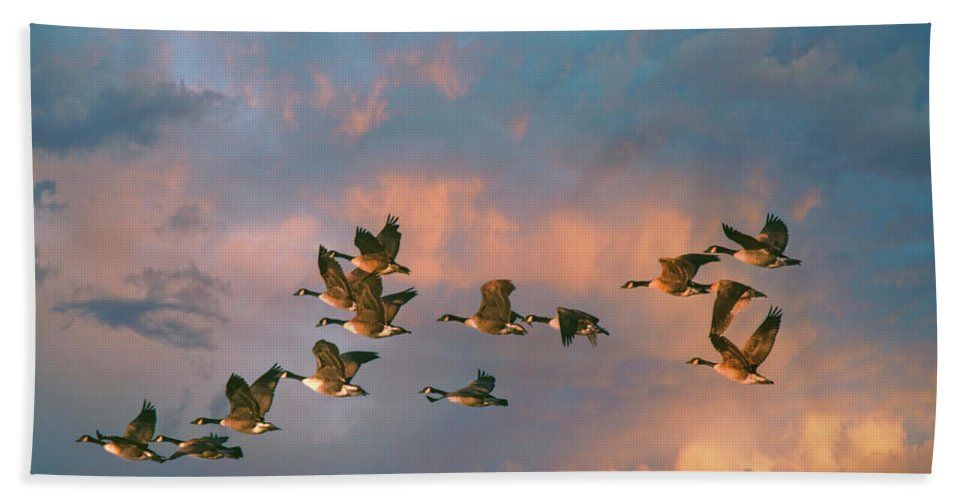 Geese Hand Towel featuring the photograph Group Flight by John Rivera