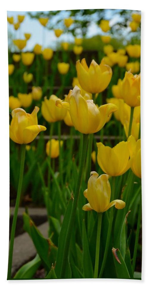 Flowers Bath Sheet featuring the photograph Grouping Of Yellow Tulips by Jennifer Wick
